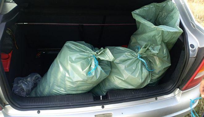 Foto: Peste 70 kg peşte fără documente legale, confiscate de poliţiştii de frontieră