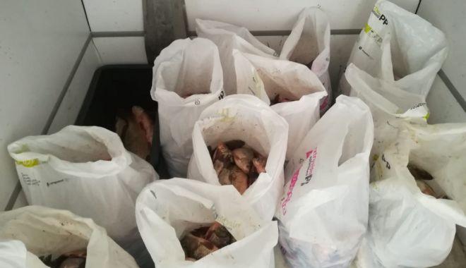 Foto: Sute de kg de peşte, confiscate de poliţiştii constănţeni