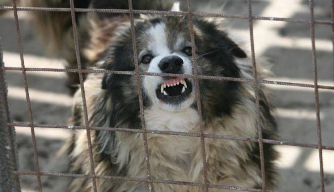 Foto: Caz ŞOCANT! Fetiţă de 3 ani, UCISĂ de câine, chiar în curtea casei
