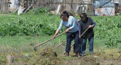 Foto: Harta şomajului în mediul rural constănţean