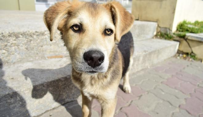 Foto: În legea câinilor