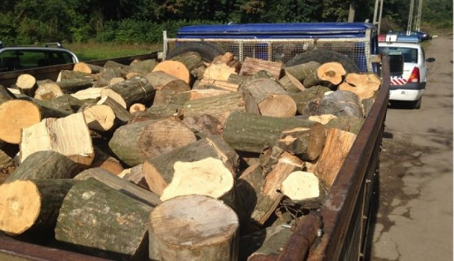 Foto: Lege: Hoții de lemne vor rămâne fără mijloacele pe care le folosesc pentru comiterea ilegalităților!