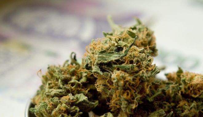 DIICOT: Orice produs care conţine THC, indiferent de concentraţie, se încadrează noţiunii de drog - 1-1611071220.jpg