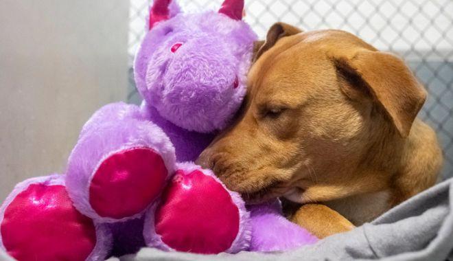 Digi 24: Un câine fără stăpân din SUA a primit cadou un unicorn de pluș pe care îl furase de cinci ori dintr-un magazin - 1-1616930103.jpg