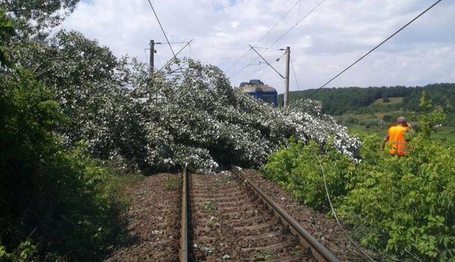 Foto: 105 trenuri au fost întârziate de căderile  de copaci