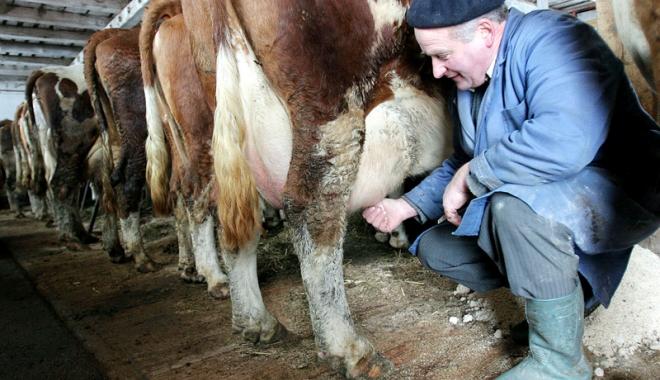 Foto: 11.226 de producători de lapte primesc 5.448.041,5 euro