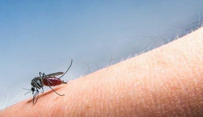 Foto: Încă o persoană a murit din cauza infectării cu virusul West Nile