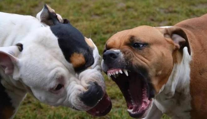 Foto: TRAGEDIE! Un COPIL DE PATRU ANI a fost UCIS de câinele unchiului său