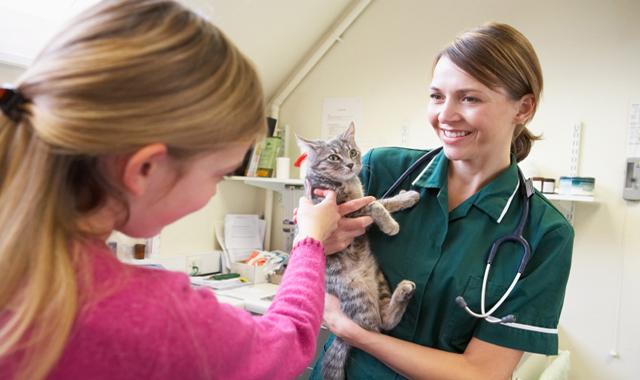 Foto: Cum ajuţi o pisică lovită de maşină