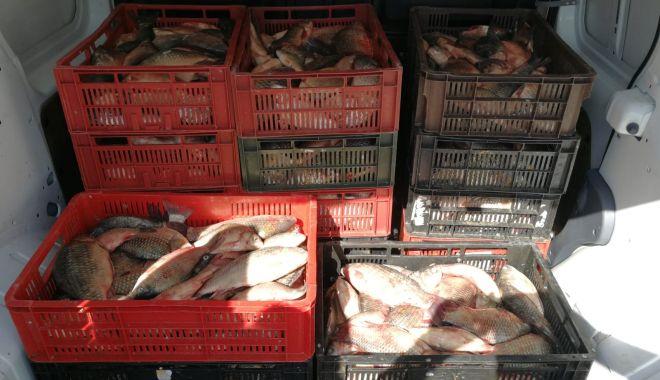 Foto: Peste 200 kg de peşte fără documente legale, confiscate de poliţiştii de frontieră