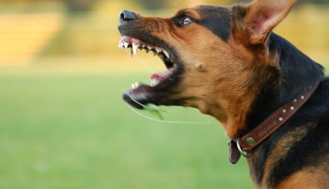 Foto: Legea Poliţiei: ATAC ARMAT dacă asmuţi un câine asupra altei persoane