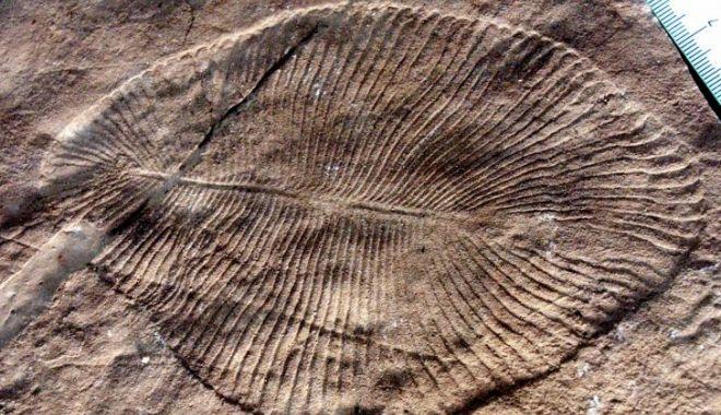 Foto: Savanții au confirmat care este cel mai vechi animal din lume