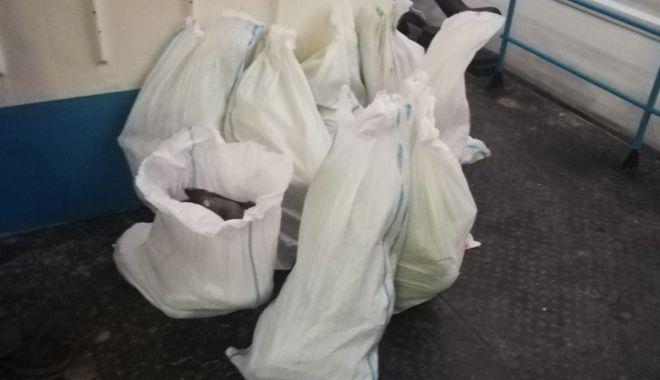 Foto: Peşte de contrabandă, confiscat de poliţiştii de frontieră