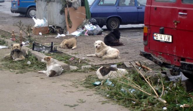Foto: De groază! Sute de boli transmise de la animal la om (I)
