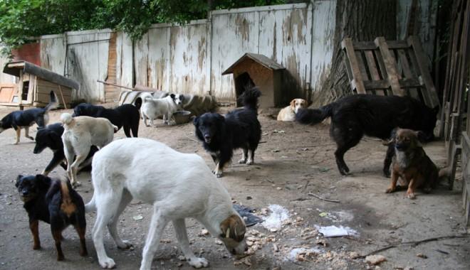 Foto: Ştiţi câte boli trec de la animale la oameni? (II)