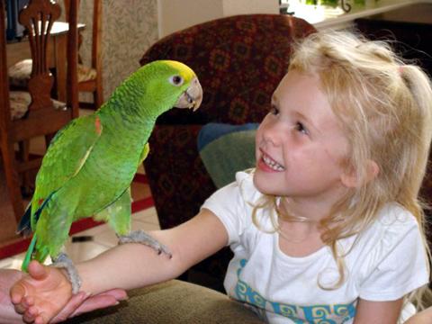 Foto: Cum stimulezi papagalul să devină vorbăreţ