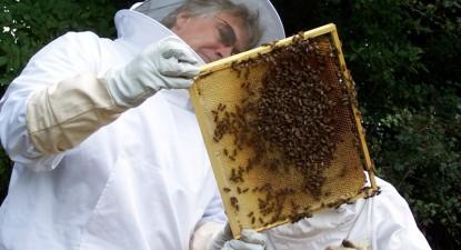 Veninul de albine tratează de toate, de la negi la cancer - 1c8fc566f7a2ea925bddbd463251c550.jpg