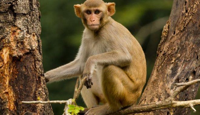 Foto: Bărbat mort, după ce mai multe maimuţe l-au atacat cu cărămizi