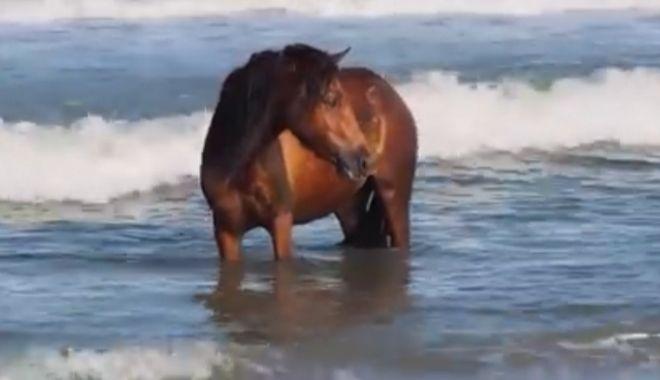 """Foto: Video. În vacanță pe litoral! Un cal a fost filmat """"răcorindu-se"""" în apele mării"""