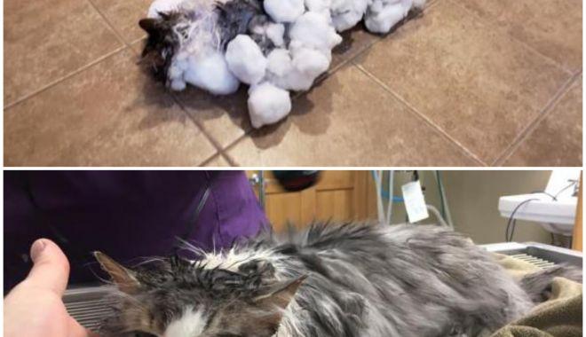 Foto: O pisică îngropată în zăpadă a fost salvată în mod miraculos. Cum arată acum felina