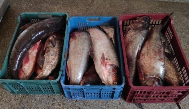 Foto: Peste 60 kilograme de peşte fără documente legale, confiscate de poliţiştii de frontieră