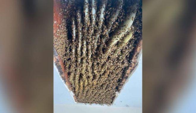 CNN: O femeie din SUA a descoperit în casa ei un stup de peste 100.000 de albine - 21043016180302beesgeorgiahomeexl-1620471462.jpg