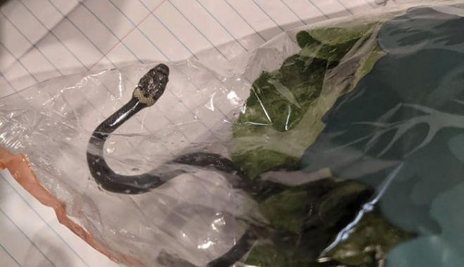 The Guardian: Un cuplu din Australia a găsit un șarpe veninos într-o pungă de salată - 2200-1618643884.jpg