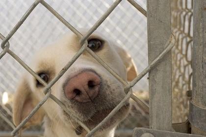 Foto: Programul de sterilizare şi vaccinare al câinilor, în dezbatere la Medgidia