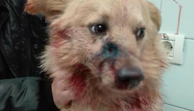IMAGINI ŞOCANTE! Un câine a fost împuşcat, la Constanţa. Poliţiştii fac cercetări - 26938216169591405376470712072098-1515929509.jpg