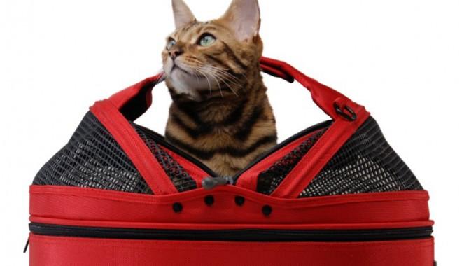 Foto: Cu pisica în concediu? Iată ce obligaţii ai!