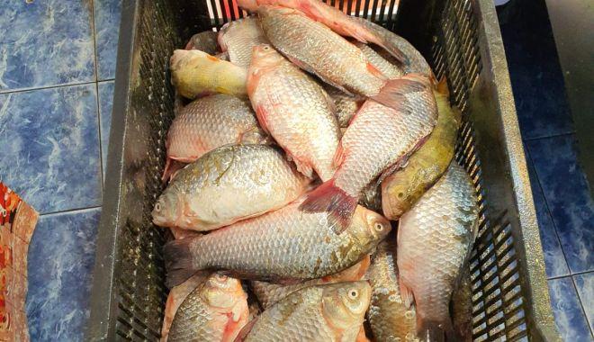 Galerie foto / Control la vânzătorii de pește. Mai mulți agenți economici, amendați - 3181d89692094eaf9d4501782aeee428-1588230391.jpg