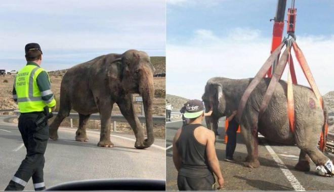 Foto: TERIBIL ACCIDENT! Autostradă blocată de elefanți evadați dintr-un camion răsturnat