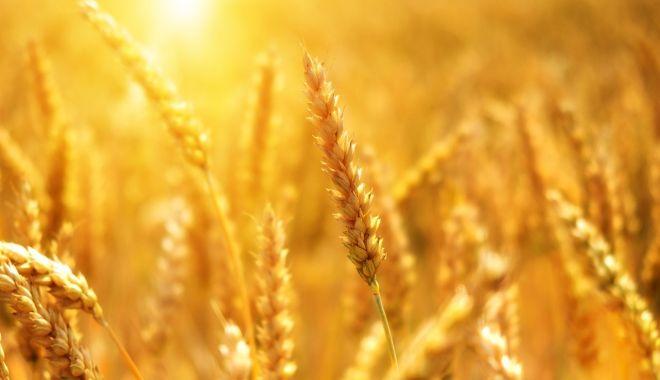 Exporturile de cereale ale României au explodat în timpul pandemiei - 3462d82ddbac4a2787f2ed3e4767921b-1592749637.jpg