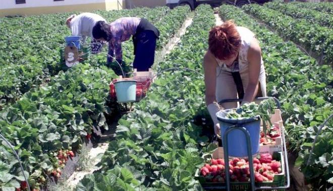Foto: 3,5 milioane de români muncesc în străinătate