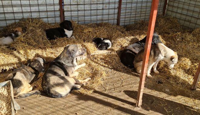 Adăpostul public pentru câinii fără stăpân a intrat în reparații capitale - 4-1606494239.jpg