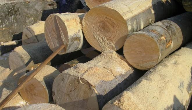 Cu cât își pot cumpăra constănțenii lemne de la ocoalele silvice - 4f26b1ed43665-1329233531.jpg