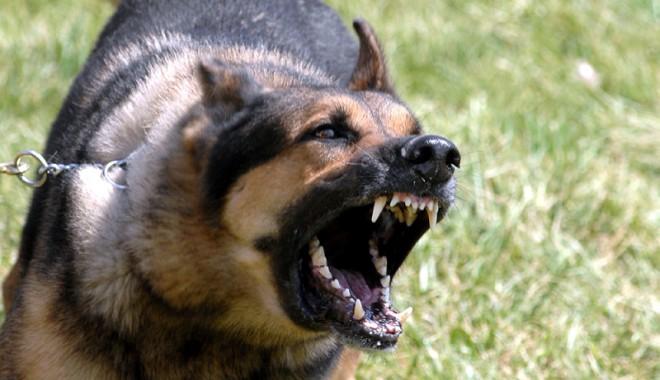 Foto: Câinii pot fi o problemă. Aflaţi când!