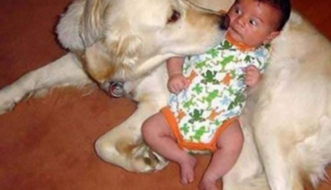Foto: Nu lăsaţi copilul în… supravegherea câinelui!
