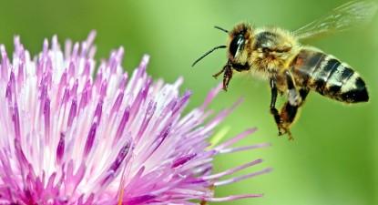 Feriți! Albinele și viespile vă pot înțepa și în gură! - 52e4ad7efb1dca70225c7bea856bd864.jpg