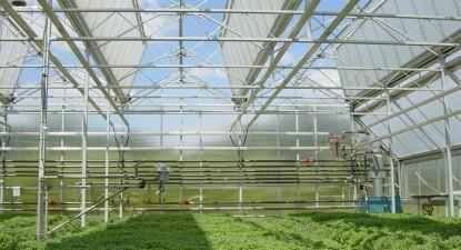 Constănțenii investesc în ferme de prepelițe, ciupercării, sere, silozuri și patiserii