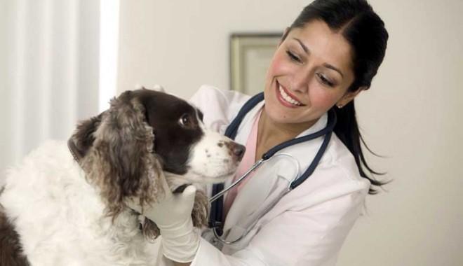 Antigelul, toxic pentru câini? - 5decantigelcaini-1386257418.jpg