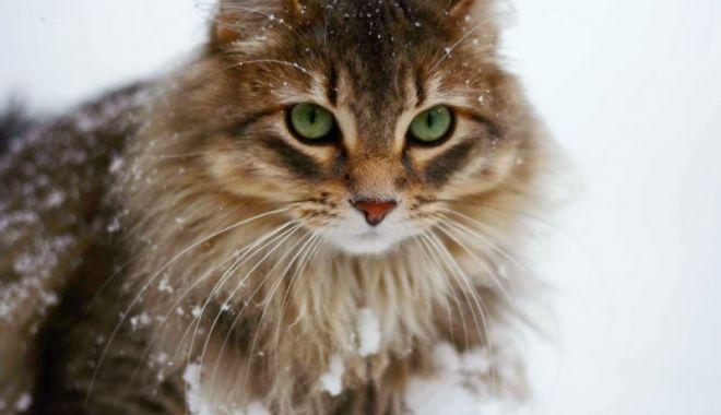 Foto: Recomandări pentru protejarea animalelor pe perioada frigului