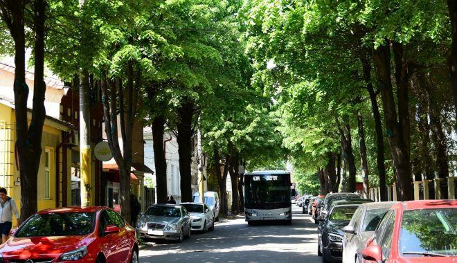 Foto: Constănţeni, se taie arborii! Atenţie unde parcaţi