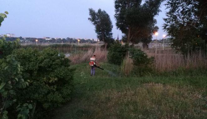 Foto: Primăria Constanța continuă acțiunile de dezinsecție