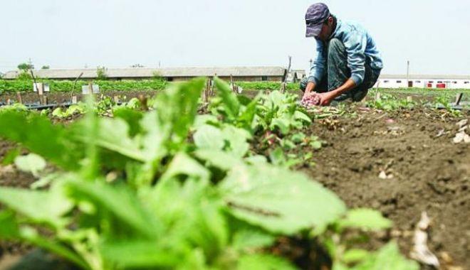 Foto: Veşti proaste pentru zilieri: obligaţi să contribuie şi ei la pensii?