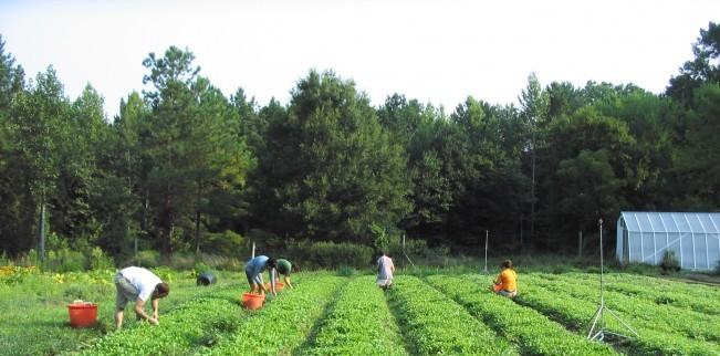 Foto: Agricultură ecologică / Constănţenii mai au doar câteva zile pentru a solicita ajutor