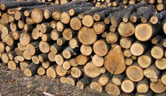 Foto: Zi cu ghinion pentru un bărbat prins cu lemne transportate ilegal
