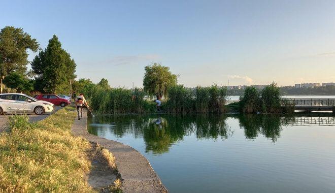 Continuă acţiunile de dezinsecție în municipiul Constanța - 7-1625828085.jpg