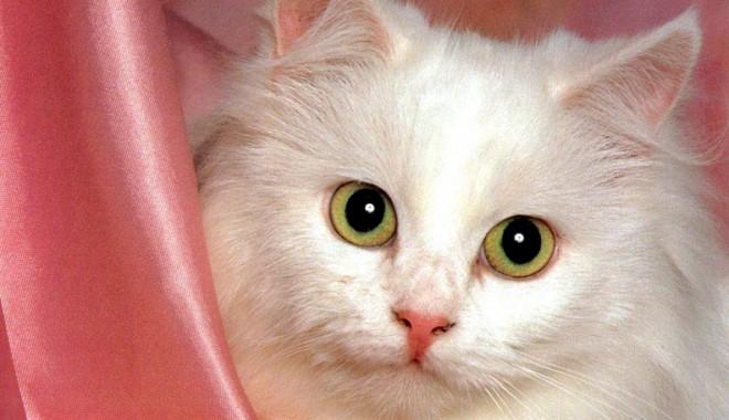 Ajută pisica să facă față căldurii - 8augpisica-1375969726.jpg
