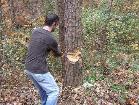Foto: Dosar penal pentru că au tăiat copaci